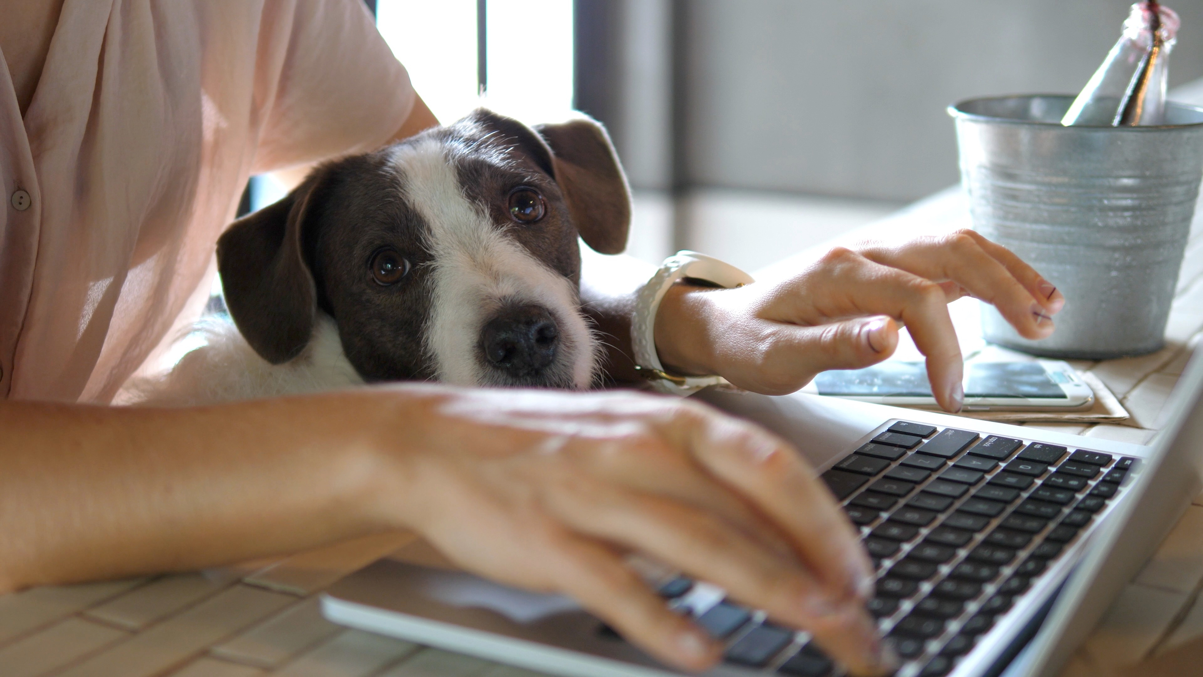 shutterstock_1591212466 work from home with dog